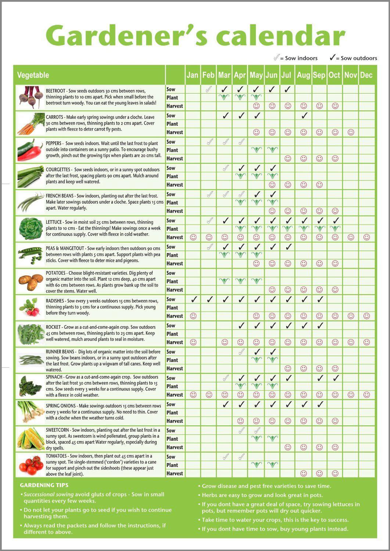 A3 Novice Gardener'sbeginner's Vegetable Growing Gardening in Allotment Planting Calendar