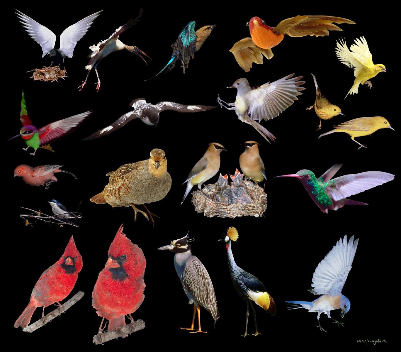 Birds  Meaning And Interpretation Dream Book Miller with regard to Cockfighting Moon Calendar 2020