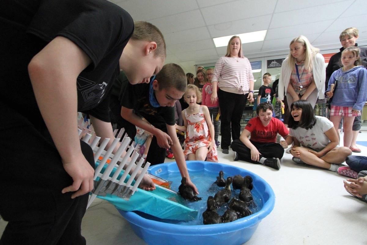 Ducklings Make A Splash At Red Deer School – Red Deer Advocate inside G.h. Dawe School