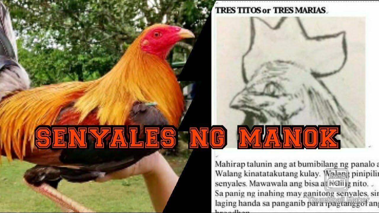 Mga Senyaladong Manok in Kaliskis Ng Manok