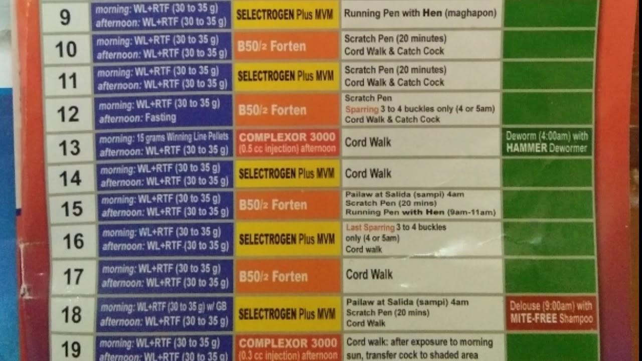 Sagupaan 21 Days Conditioning Guide within Calendar Ng Manok Panabong