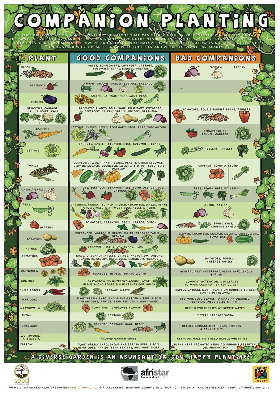 Vegetable Companion Chart  Bobi.karikaturize inside Vegetable Planting Calendar Excel