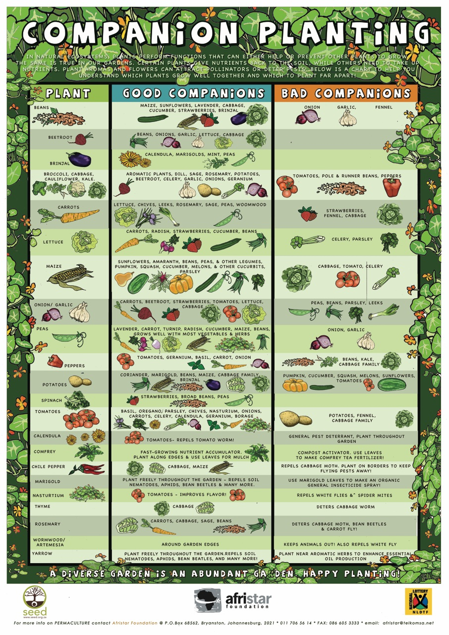 Vegetable Growing Chart  Bobi.karikaturize inside Allotment Planting Calendar