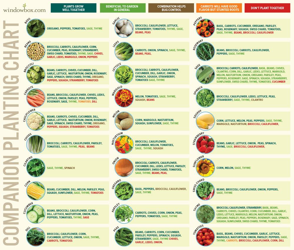 Vegetable Seeding Chart  Bobi.karikaturize pertaining to Allotment Planting Calendar
