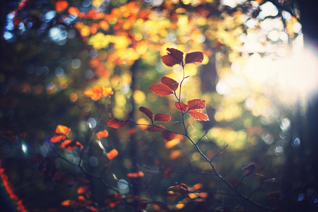 Hello Autumn | Shooting For Trueflav Records | Vik | Flickr with Goodbye Summer Hello Fall Wallpaper