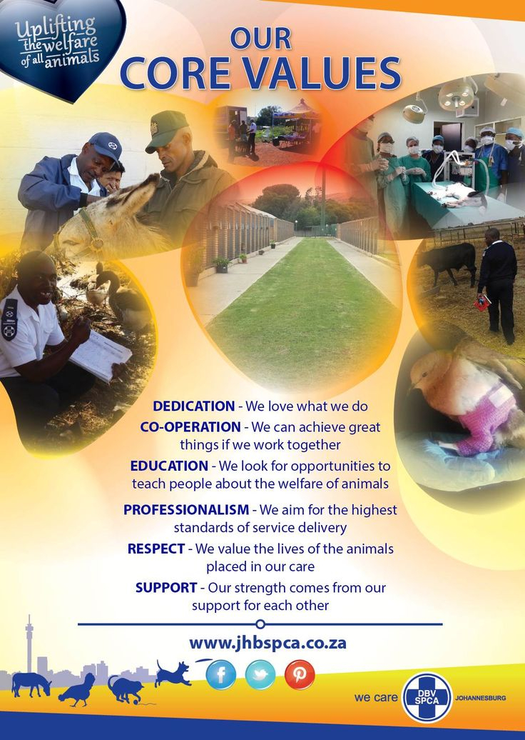 Pin By Johannesburg Spca On Donate Now   Donate Now, Core pertaining to Nelson Recycling Calendar