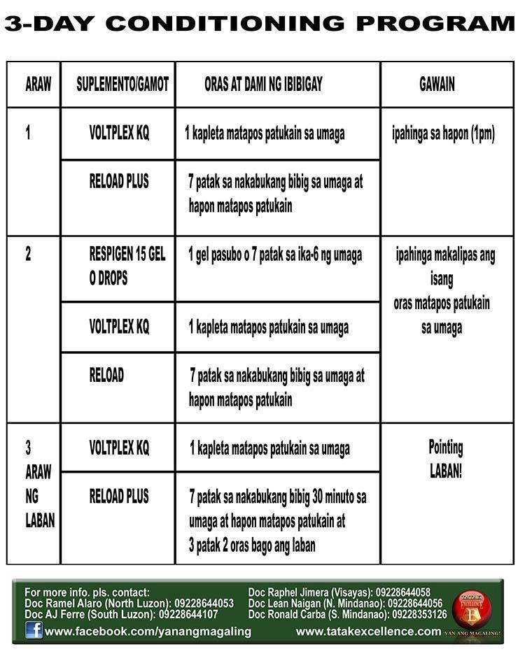 Sabong   Cockfight: 3 Day Conditioning throughout Manok Panabong Moon Calendar Sabong