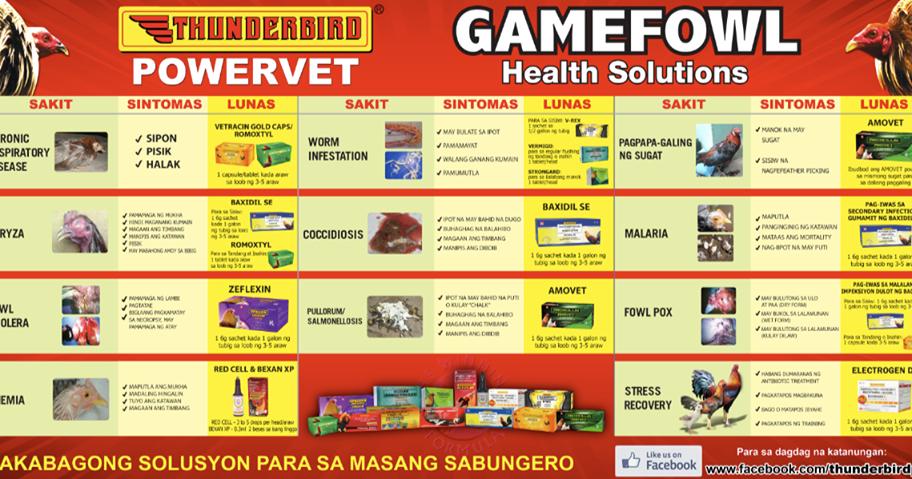 Sabong | Cockfight: Gamefowl Health Solutions regarding Calendar Ng Manok Panabong 2021